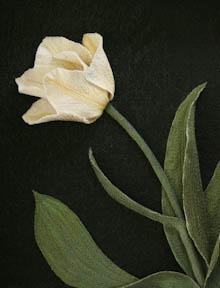 Tulip crop by Tracey Lawko