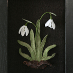 Snowdrops by Tracey Lawko